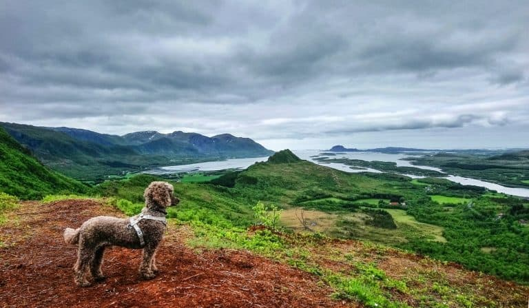 long-coated brown dog standing near mountain side at daytime