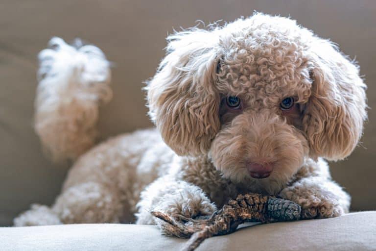 beige puppy plush toy